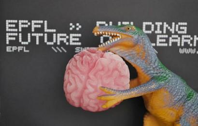Dino_cerveau-EPFL.jpg