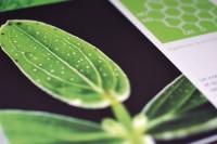 Les-plantes-savent-10.jpg